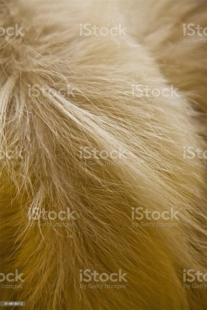 white fur animal hair skin background pattern cotton soft stock photo