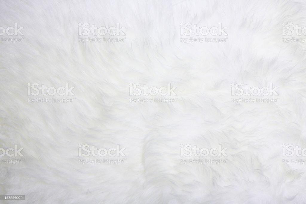 white fur stock photo