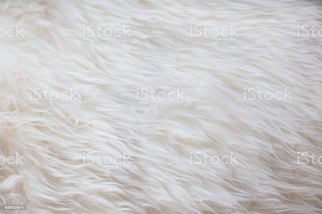 White fur texture background stock photo