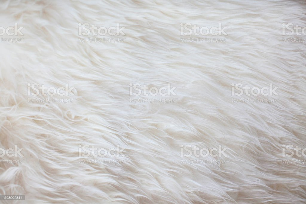 White fur texture background stock photo