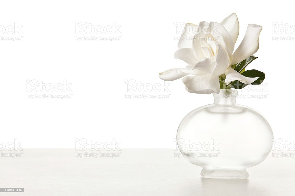 White Gardenia Blossom on Marble Table stock photo