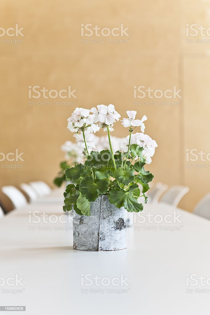 White Geranium on a table stock photo