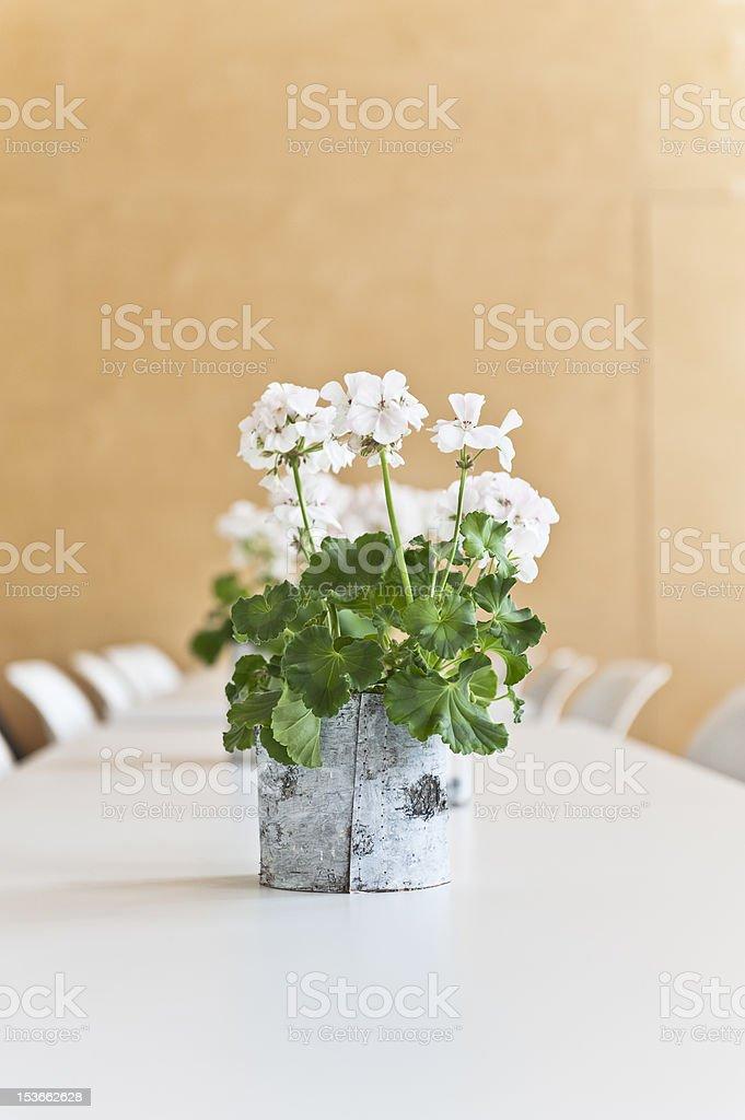 White Geranium on a table stock photo