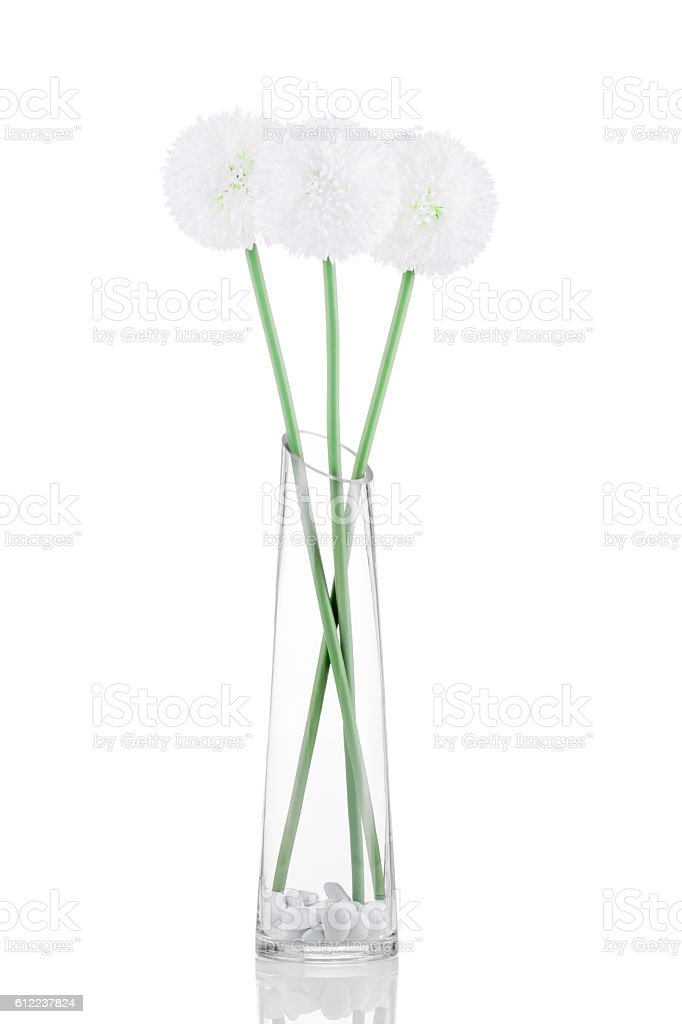 White Giganteum in vase isolated on white background stock photo