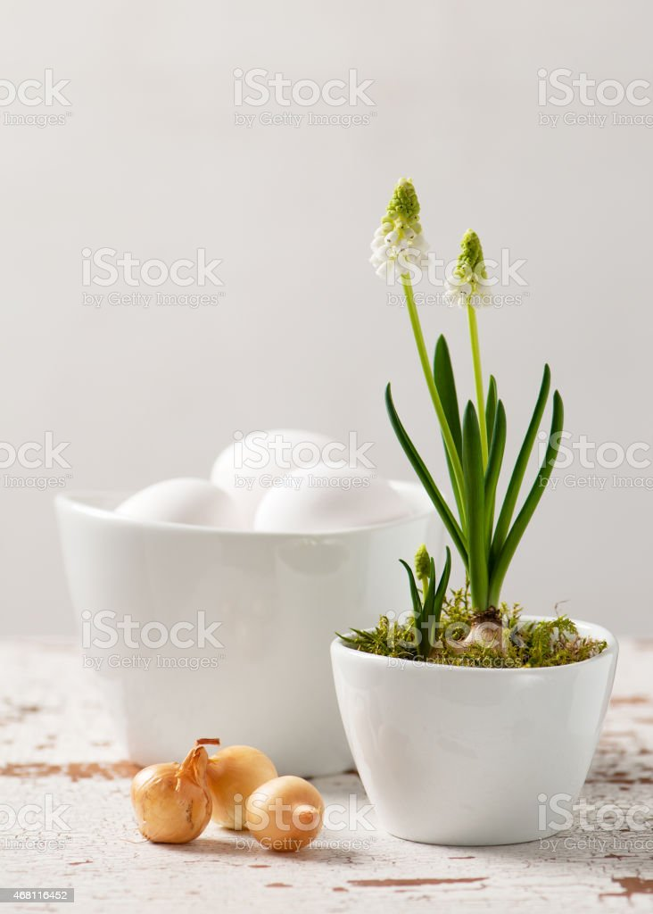 White grape hyacinth flowers, eggs and onions. stock photo