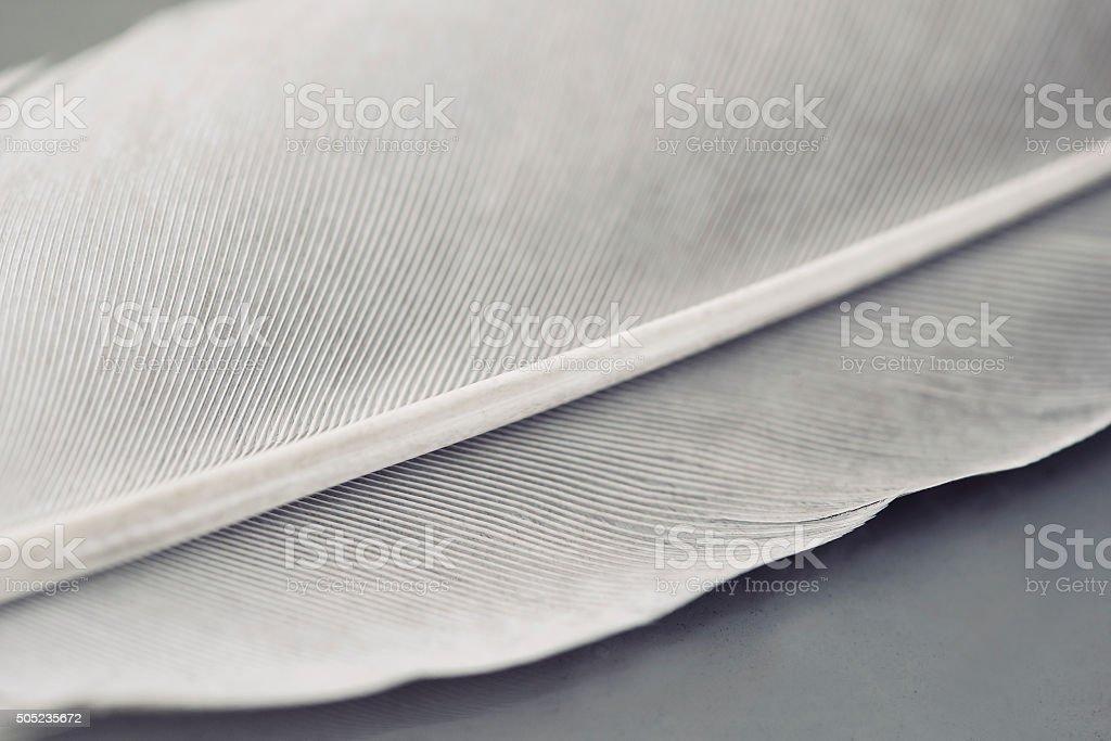 White Grey feather stock photo