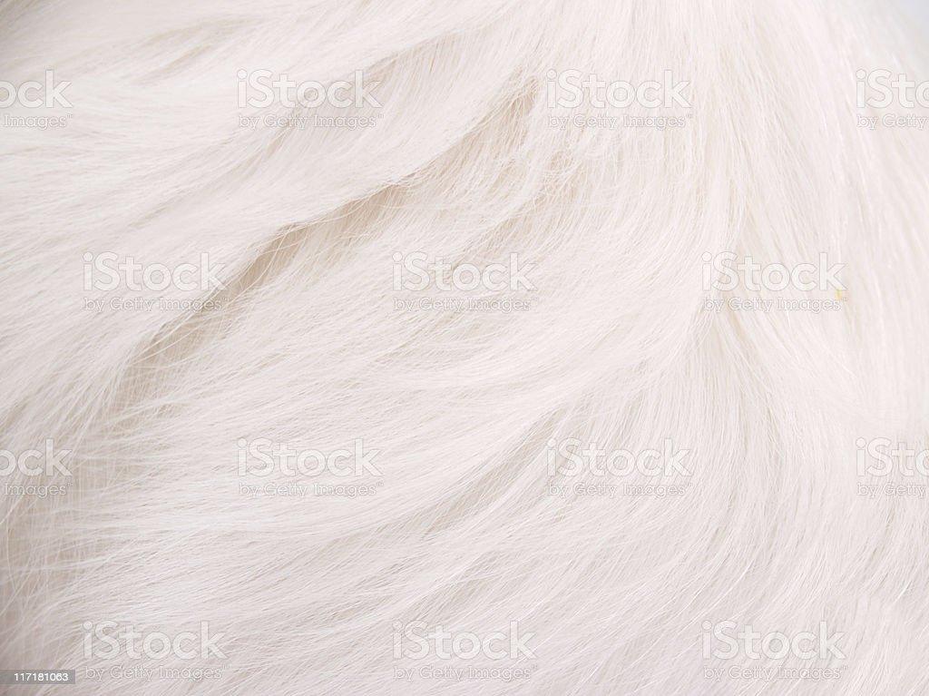 White Hair Background stock photo