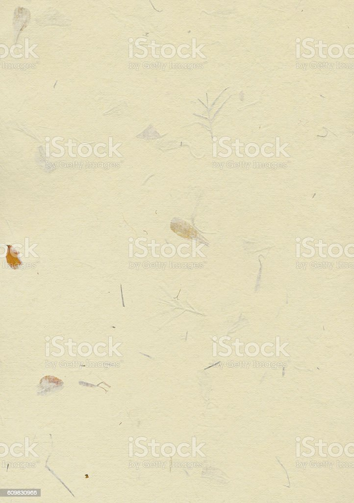 White handmade paper with dry flowers stock photo