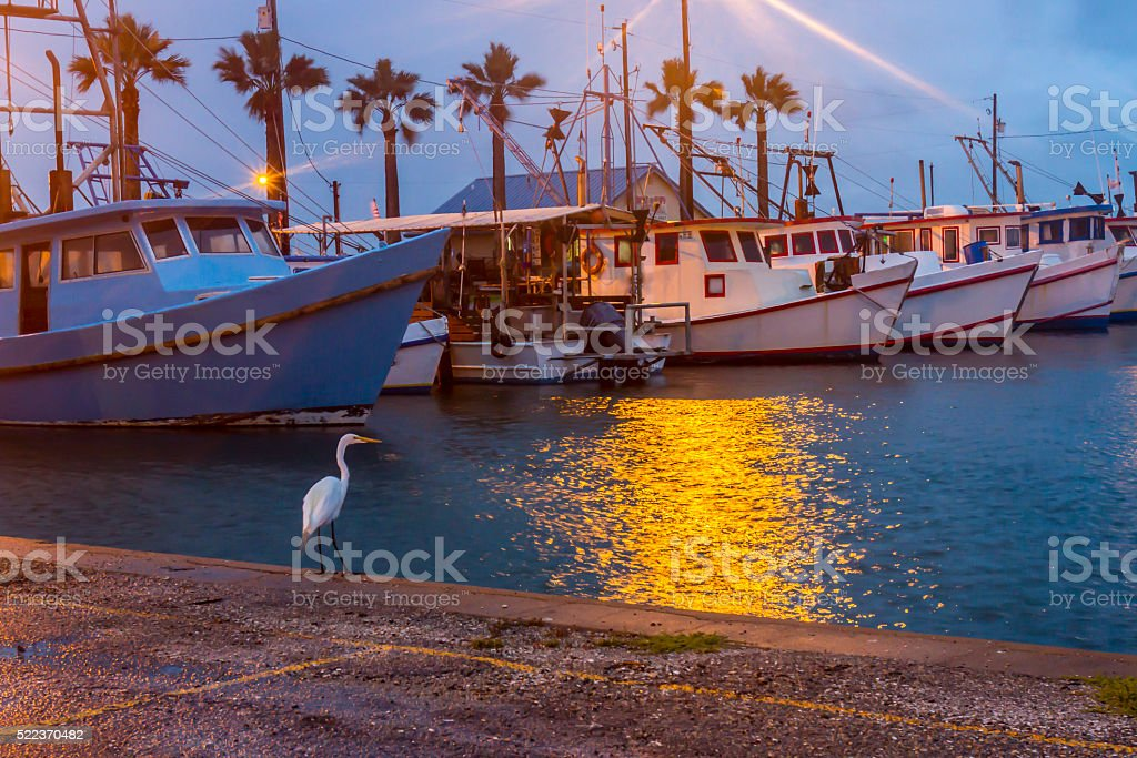 White heron waterside in harbor stock photo