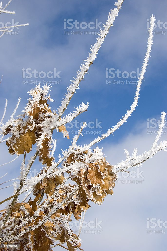 white hoar on winter tree branches royalty-free stock photo