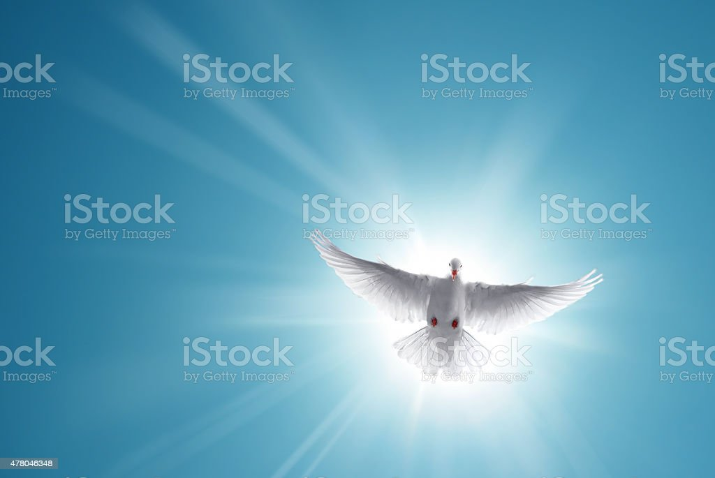 White Holy Dove Flying in Blue Sky stock photo
