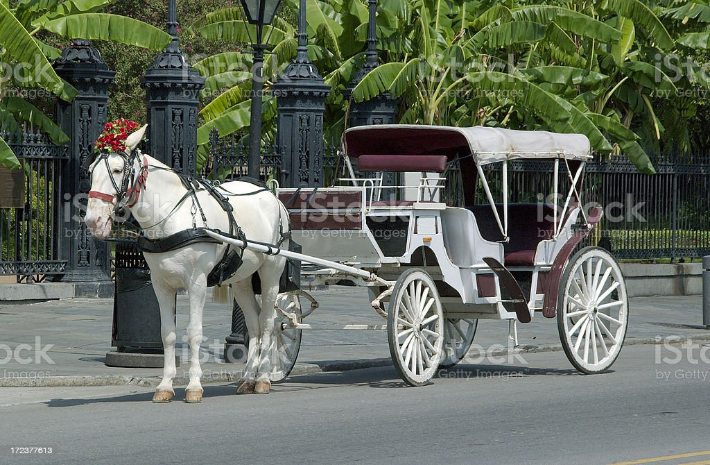 White Horse and Carriage stock photo