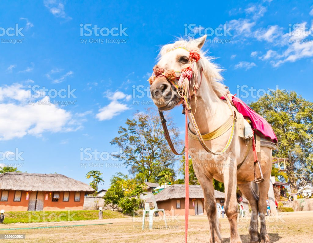 White horse, and the blue sky stock photo