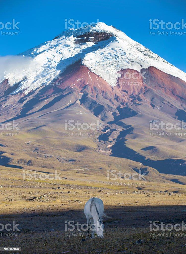 White horse and volcano stock photo