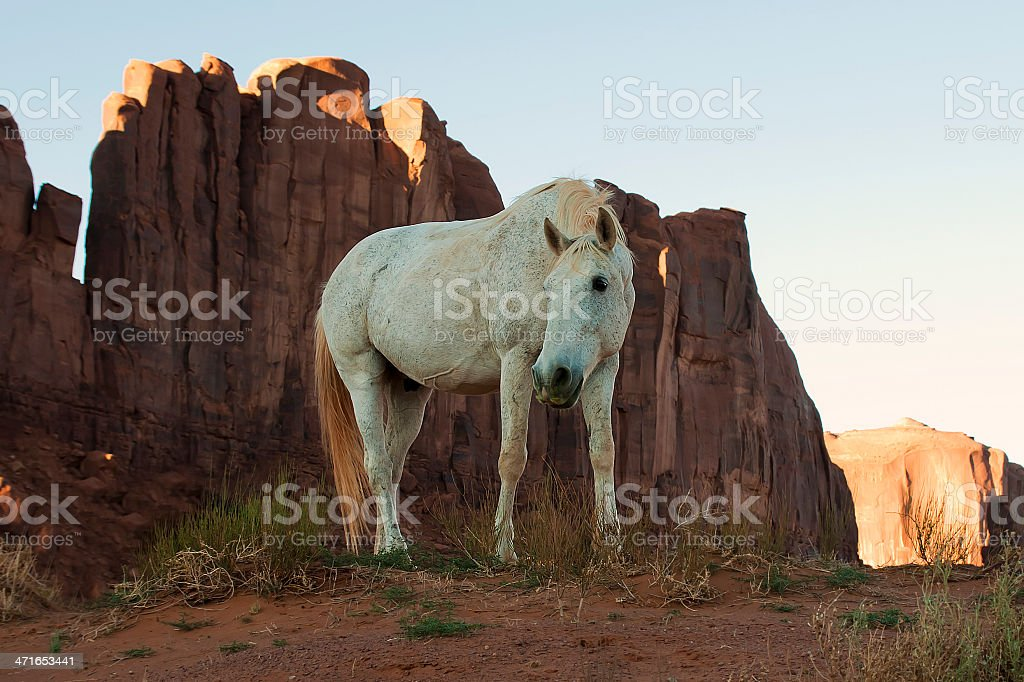 White Horse coated with Red Dust in Monument Valley, Arizona stock photo