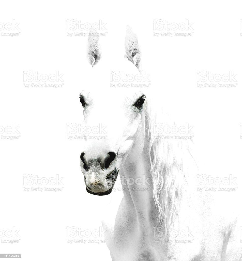 white horse details on white-background stock photo