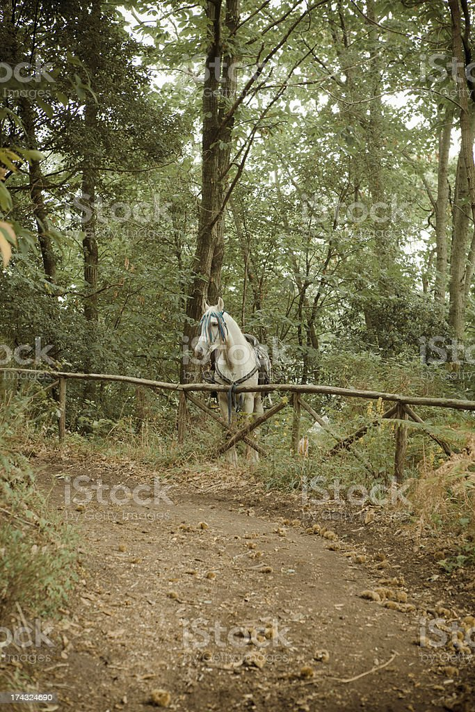 White Horse in countryside royalty-free stock photo