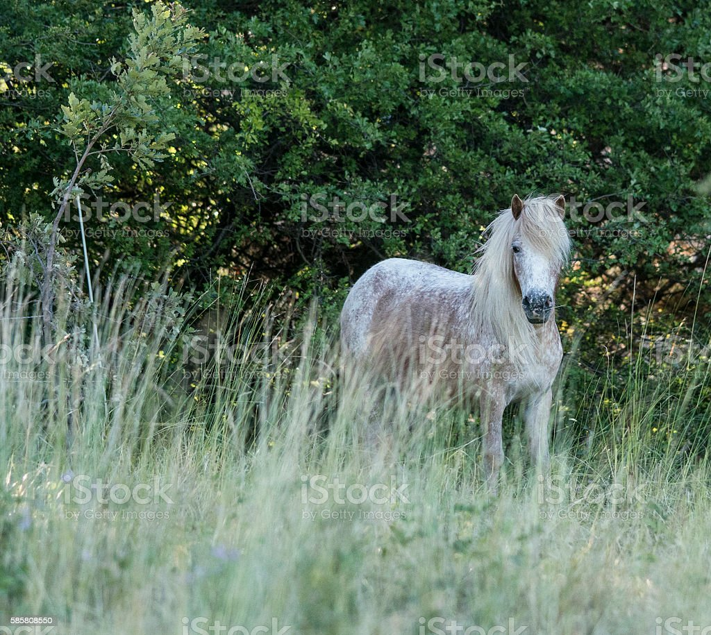 White horse in the long grass stock photo