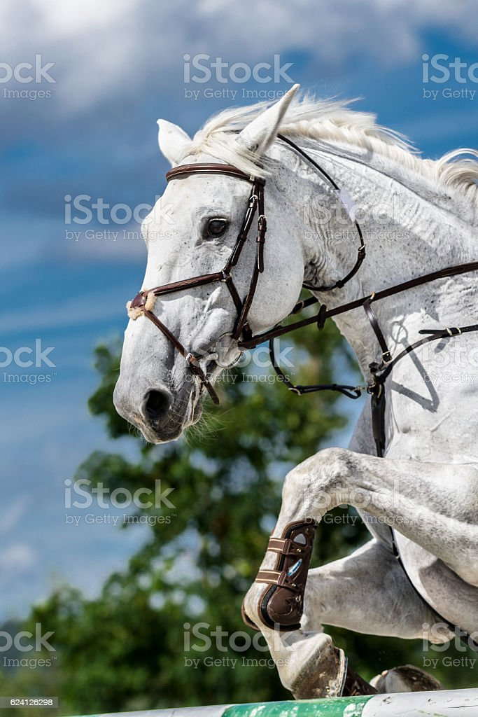 White horse jumping over hurdle stock photo
