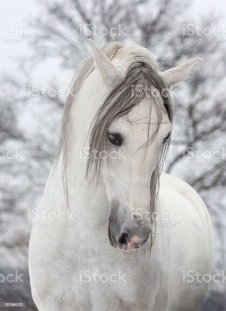 White horse looking sad on a winters day stock photo