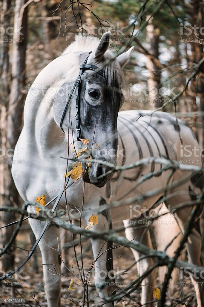 White horse painted as skeleton standing in the autumn forest stock photo