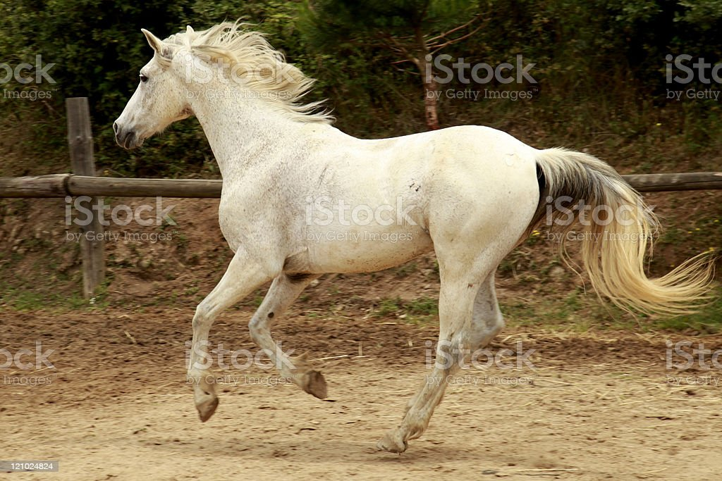 White horse. stock photo