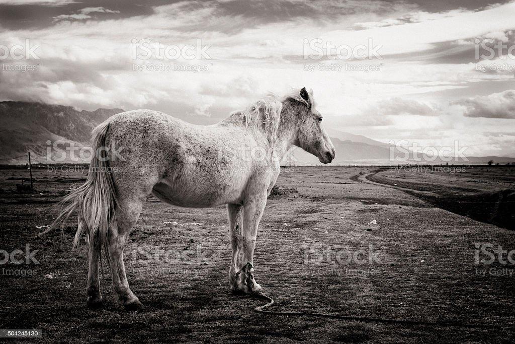 White Horse stock photo