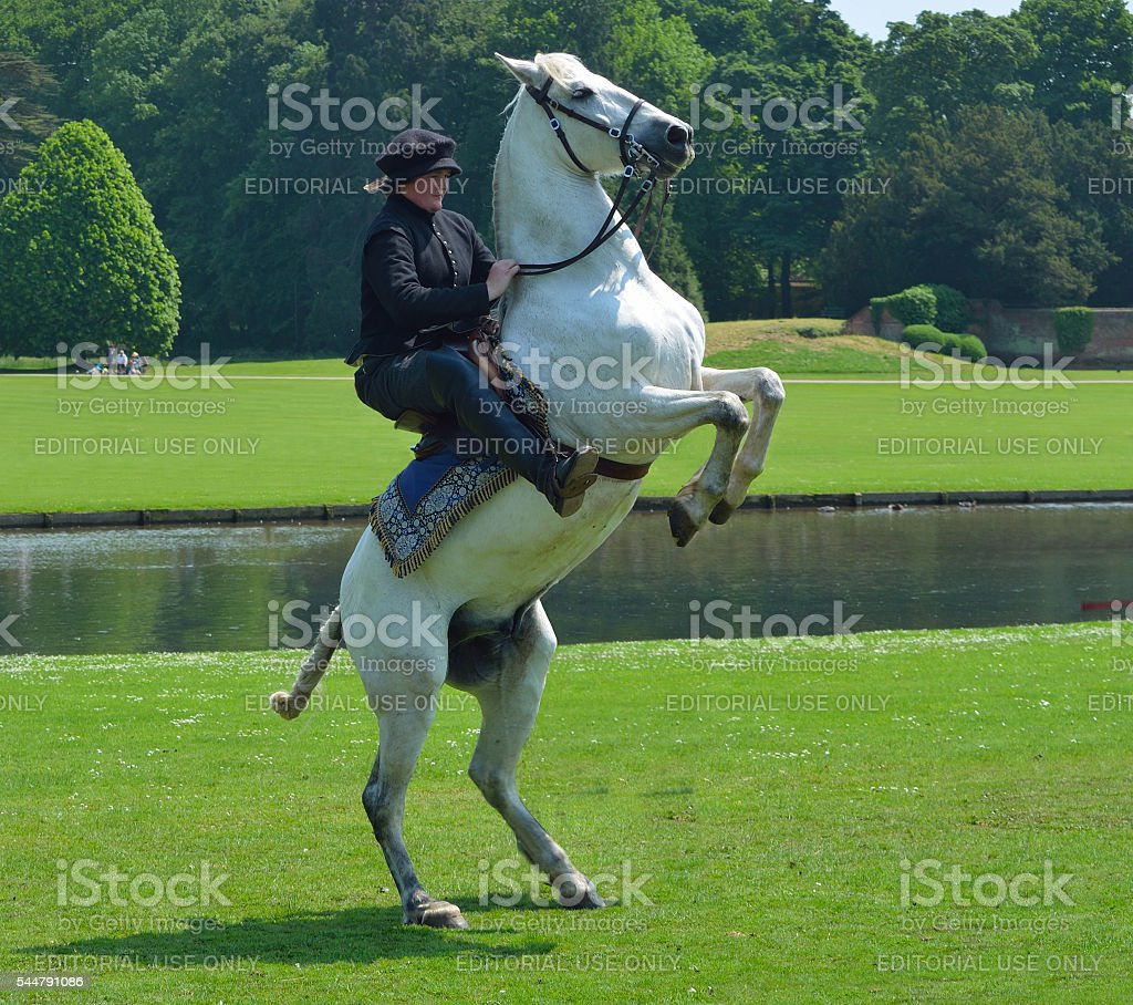 White horse rearing up with rider stock photo