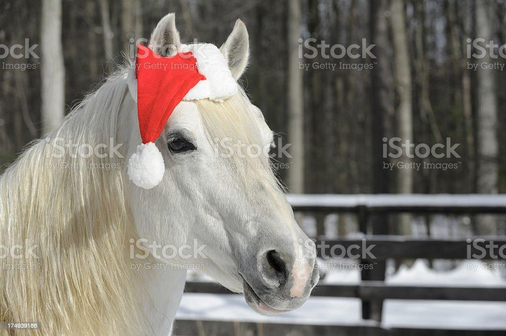 White Horse Wearing Christmas Santa Hat, Head Shot royalty-free stock photo