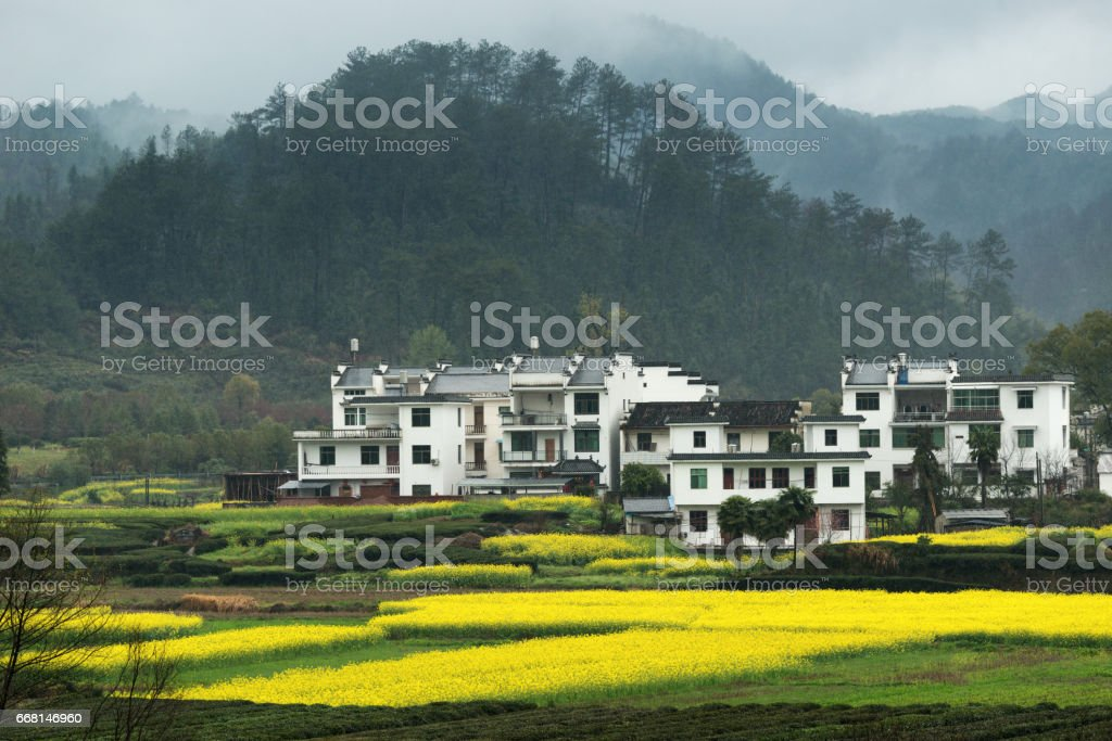 White house with Canola field at Wuyuan, China. stock photo