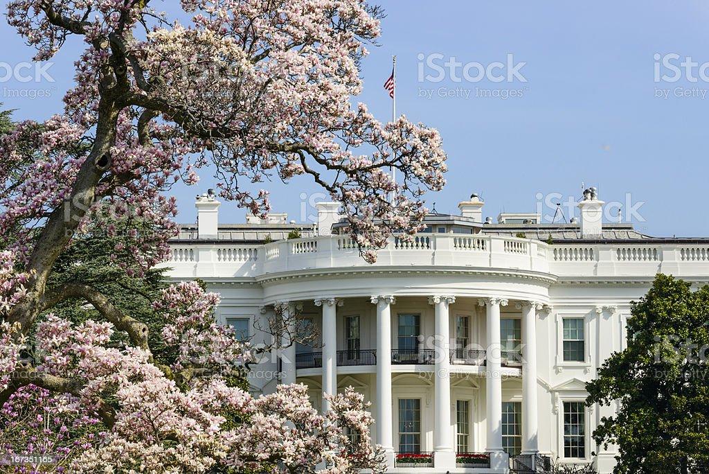US White House with flowering magnolia tree Washington DC royalty-free stock photo