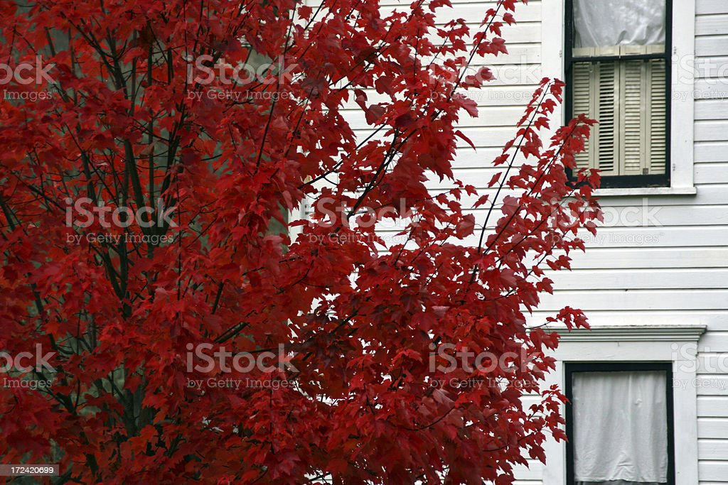 White House with Red Tree stock photo