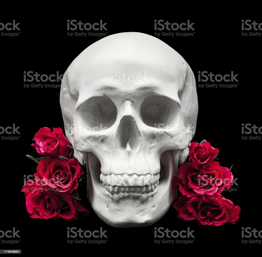 White human skull with red roses isolated on black royalty-free stock photo