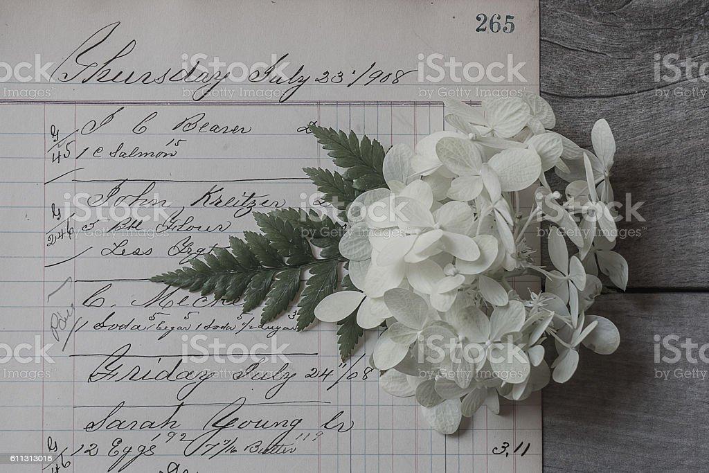 White Hydrangea 2 stock photo