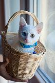 White kitten in a basket