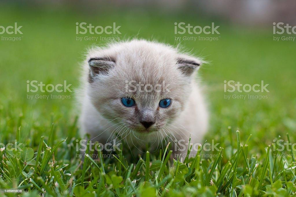 White kitten on the grass. royalty-free stock photo