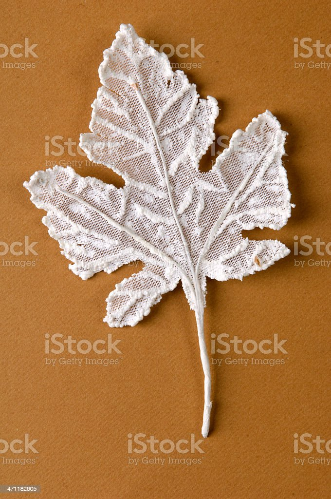 white leaves on the brown background royalty-free stock photo