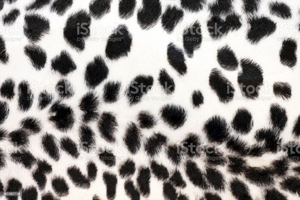 White leopard royalty-free stock photo