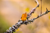 white lichen and red leave on tree branch