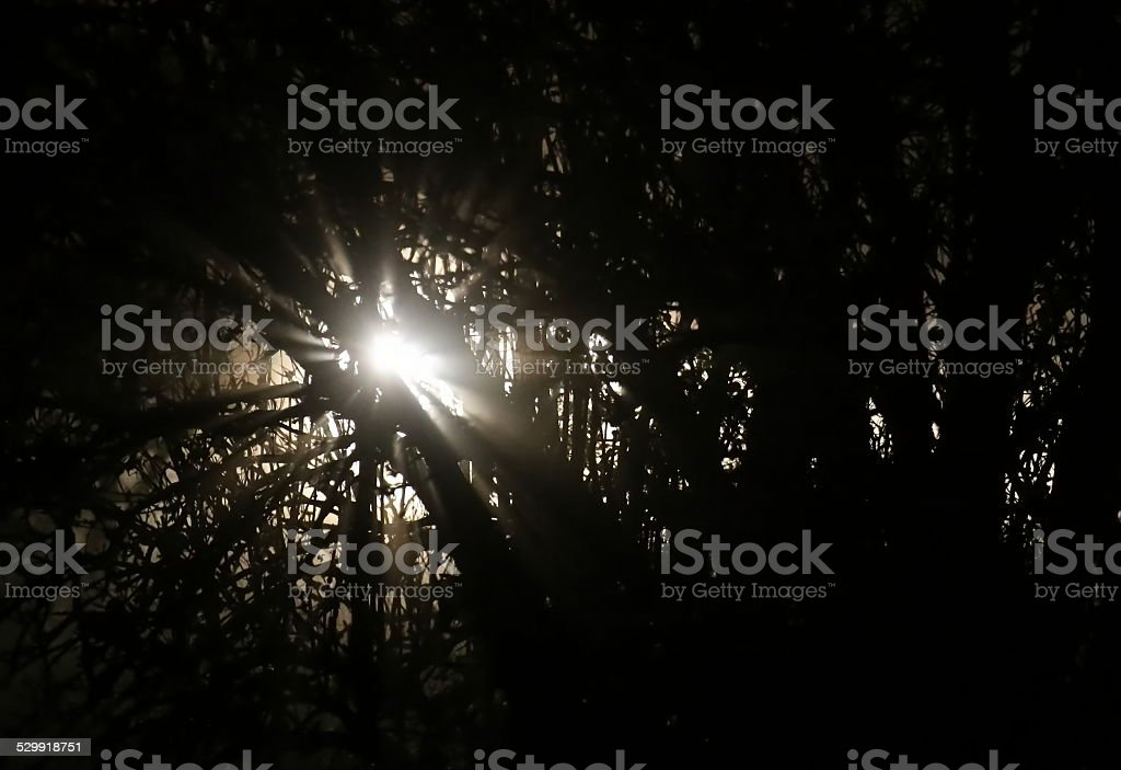 White Light In Forest stock photo