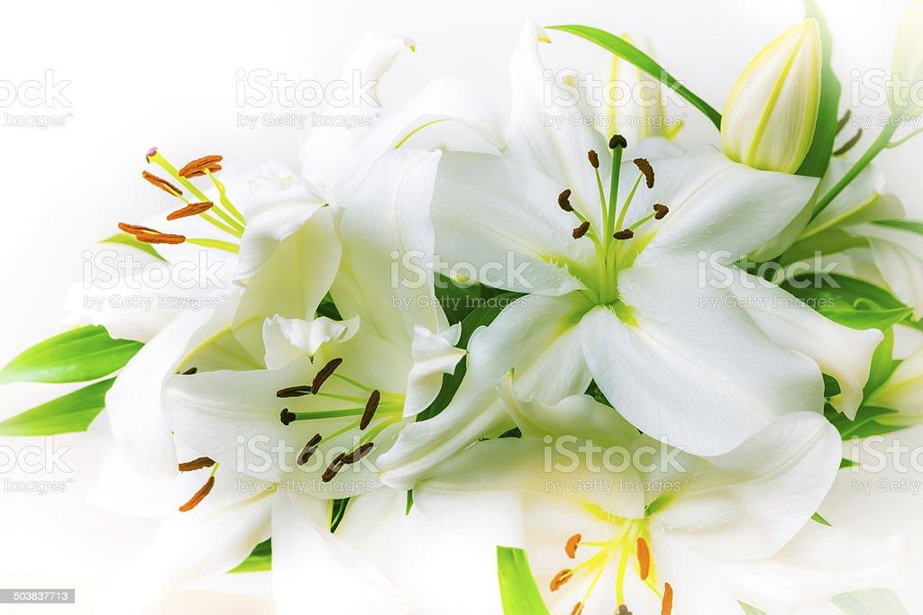 White Lilies Bouquet stock photo