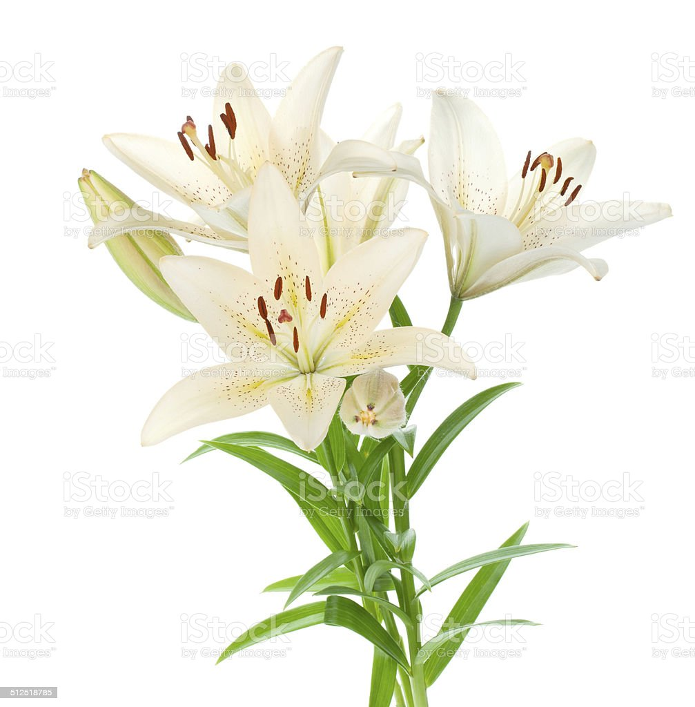 White lily bouquet stock photo