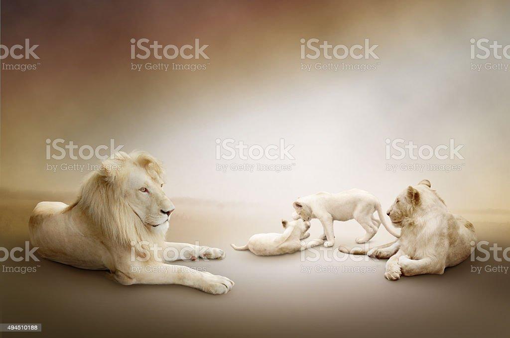 León blanco familia foto de stock libre de derechos