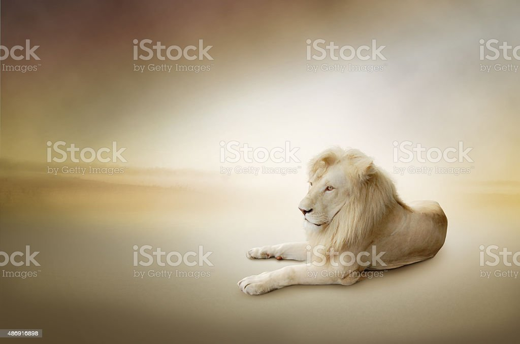 León blanco, la de los animales con cama king foto de stock libre de derechos