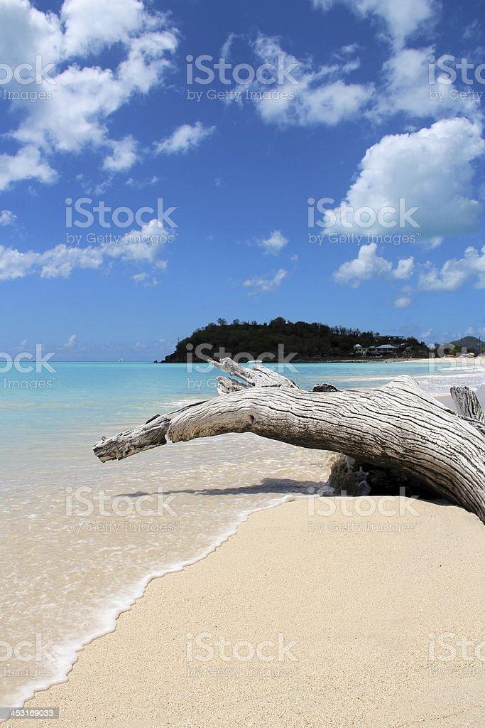 White log on the beach stock photo