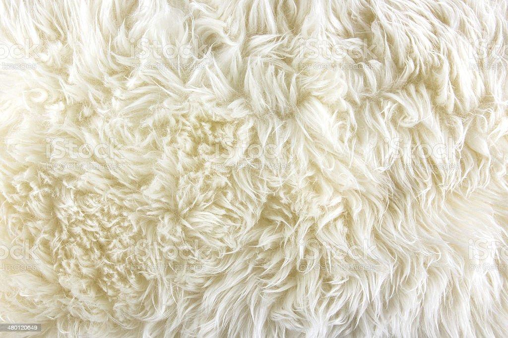 White long hair fur background stock photo