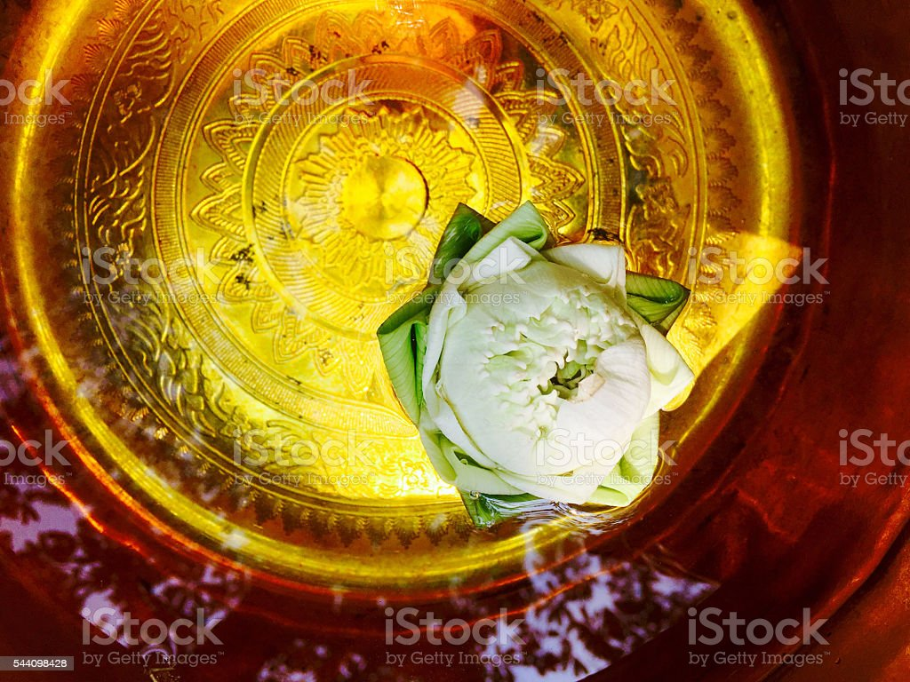 white lotus floating on water stock photo