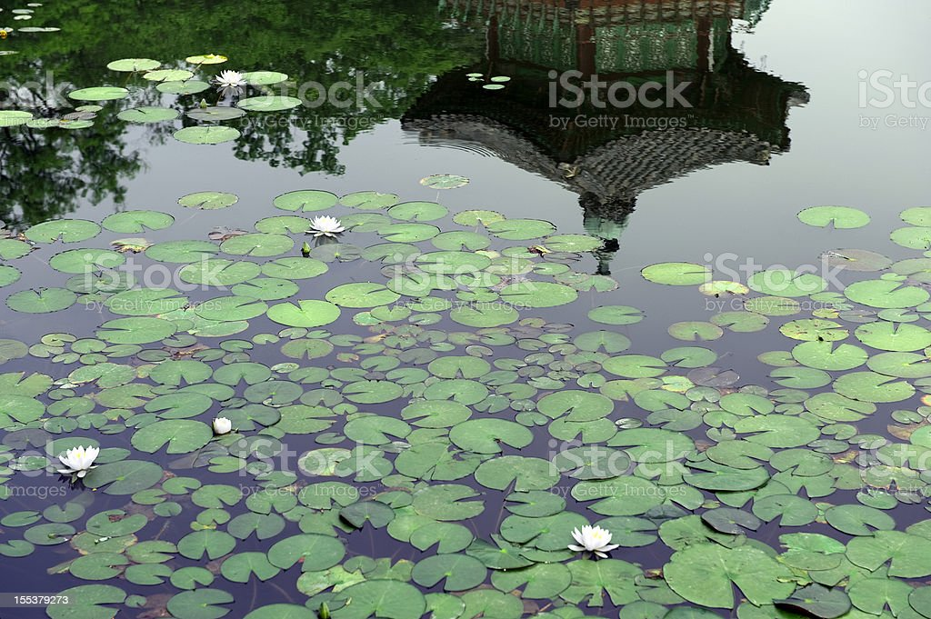 White lotus in the pond royalty-free stock photo