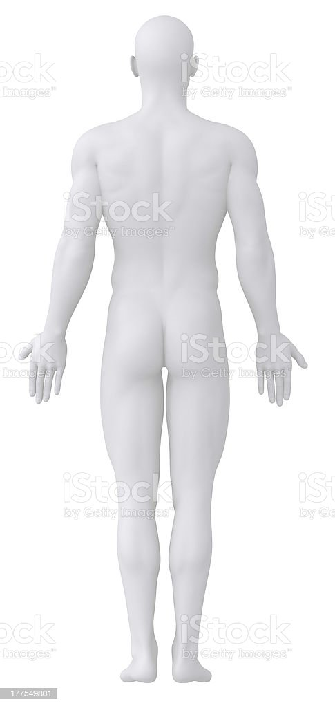 White male figure in posterior anatomical view royalty-free stock photo