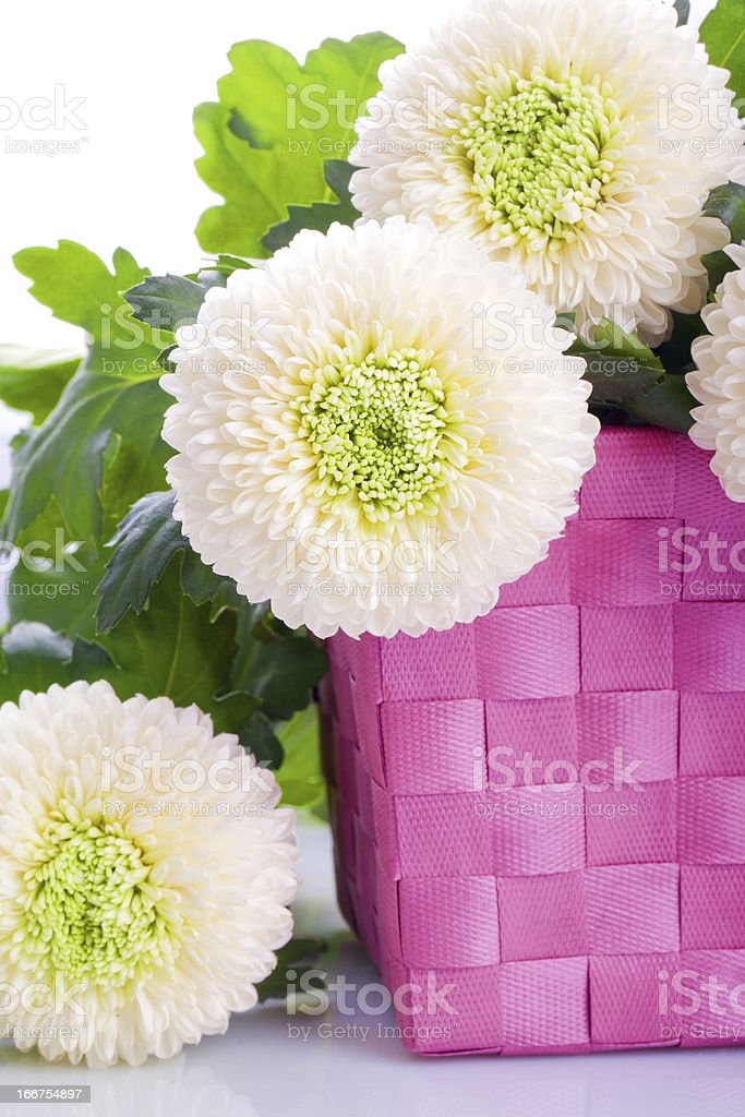 white Marigold flower bouquet stock photo